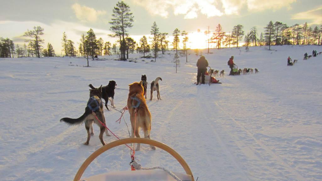 Elever på Peder Morset Folkehøgskole på hundekjøring i Meråker.